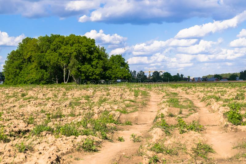 Sunny landscape of the countryside in the beginning of summer. Numerous weeds and recently laid bumpy path across the plowed field stock photography