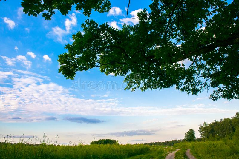 Sunny landscape of the countryside in the beginning of summer. A widely spreading shady oak tree next to the deserted country road stock photos
