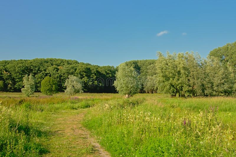 Sunny marsh with trees under a clear blue sky in Kalkense Meersen nature reerve, Flanders, Belgium. Sunny marshland with trees under a clear blue sky in Kalkense royalty free stock image