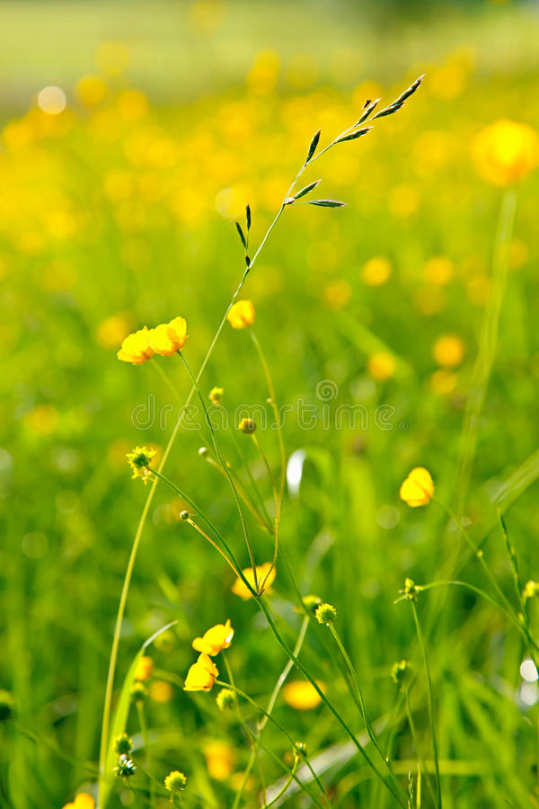 Sunny meadow royalty free stock photos