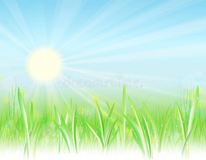 Sunny meadow. Bright, natural background with the sun, fresh grass and droplets vector illustration