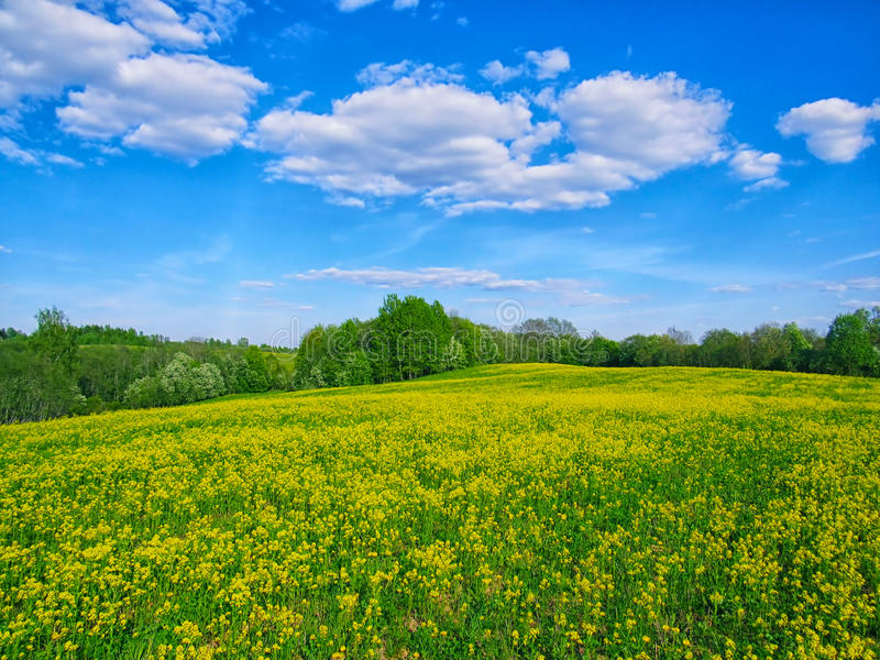 Sunny meadow stock image