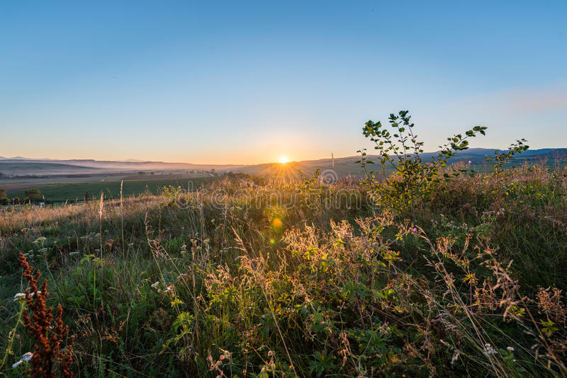 Sunny meadow with flowers and green grass. In summer at sunrise stock image