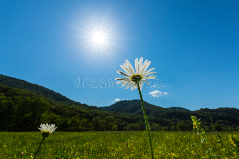 Sunny meadow in in the mountains in spring royalty free stock image