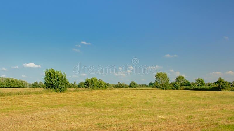 Sunny meadow with trees under a clear blue sky in Kalkense Meersen nature reerve, Flanders, Belgium. Sunny meadow with trees under a clear blue sky in Kalkense royalty free stock photos
