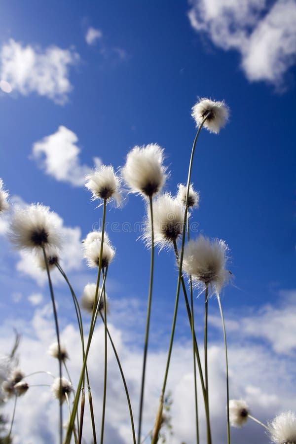 Sunny meadow und blue sky royalty free stock photo