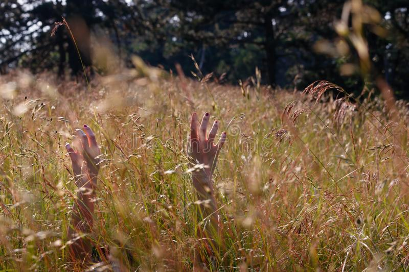 Hands of young woman relaxing in a wild flower field royalty free stock images