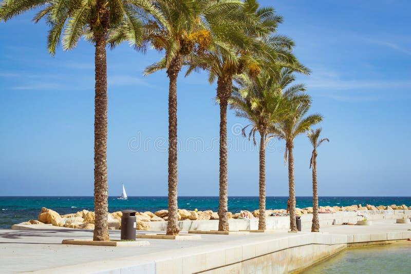 Sunny Mediterranean-Strand, Promenade mit Palmen, Torrevieja lizenzfreie stockbilder