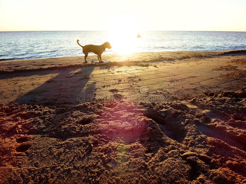 The dog is waiting for the owner on the beach while he is swimming. stock images