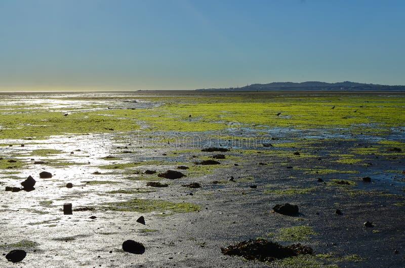 Sunny morning Dublin Bay in Sandymount Irishtown Nature Park. Photo royalty free stock image