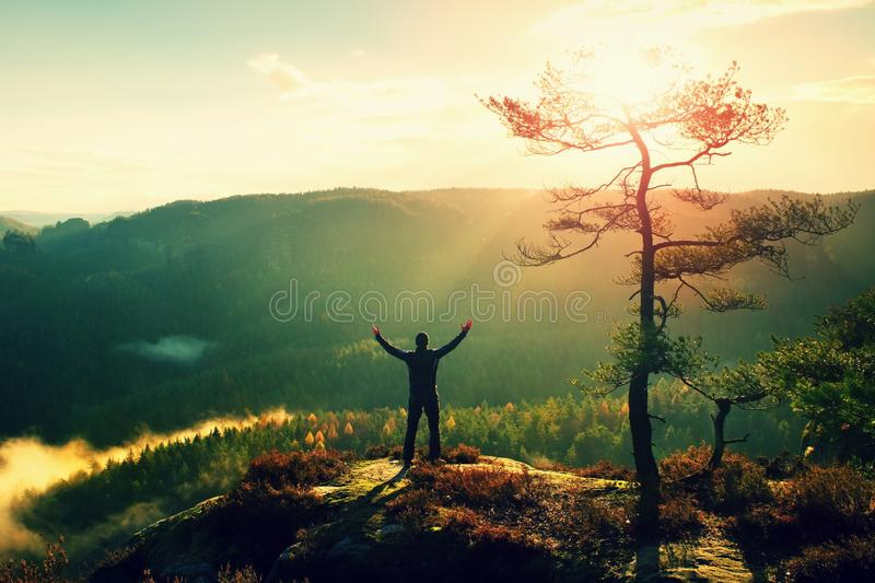 Sunny morning. Happy hiker with hands in the air stand on rock bellow pine tree. Misty and foggy morning valley. stock photos