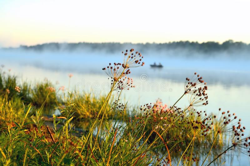 Sunny morning on the river, plants, fog, boat, reflections in th royalty free stock photography