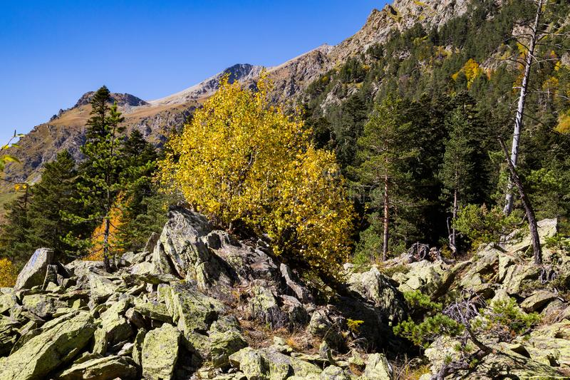 Colorful autumn landscape in the Caucasus mountains. Sunny morning scene with mountain. stock image