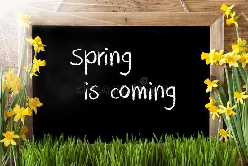Sunny Narcissus, Chalkboard, Text Spring Is Coming stock image