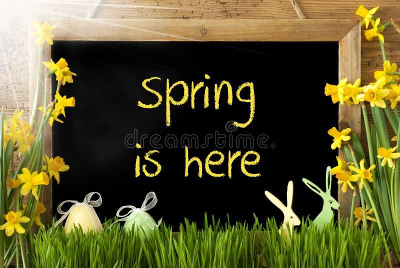 Sunny Narcissus, oeuf de pâques, lapin, ressort des textes est ici photographie stock