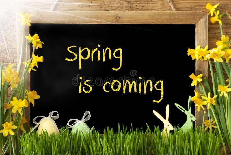 Sunny Narcissus, Osterei, Häschen, Text-Frühling kommt lizenzfreie stockbilder