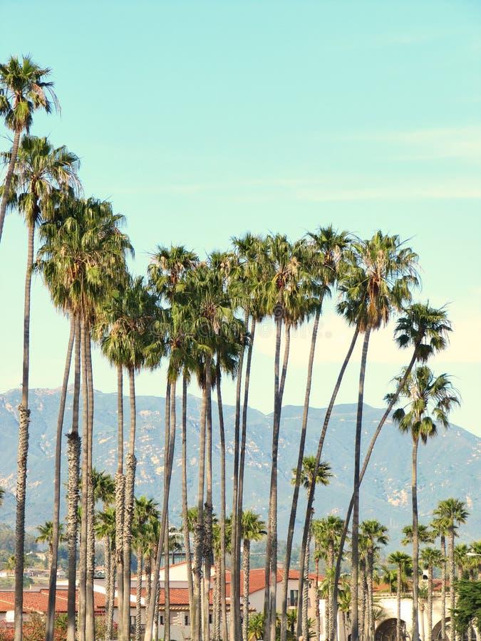 Sunny palm group in Santa Barbara, California.  stock photography
