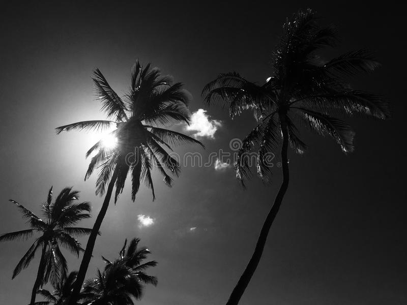 Sunny palms royalty free stock images
