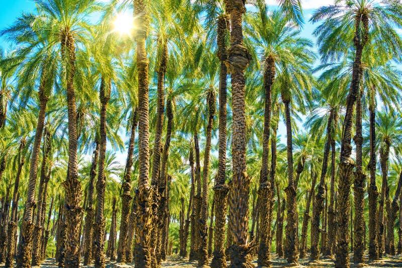 Sunny Palms Plantation arkivfoto