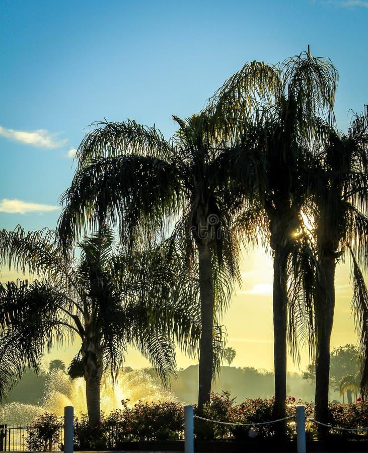 Sunny Palms stock photos