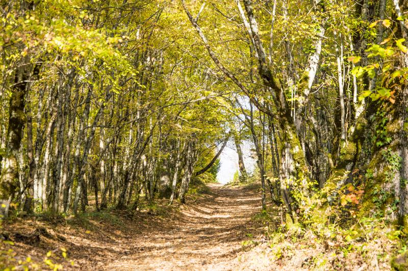 Sunny path in the autumn forest royalty free stock photo