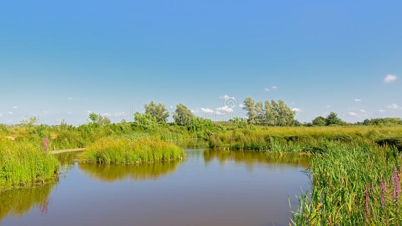 Sunny peat lake in a wetland landscape trees in Kalkense Meersen nature reerve, Flanders, Belgium royalty free stock images