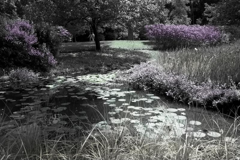 Sunny pond with water lilies, black and white and touch of colors. Beautiful sunny pond with water lilies, groves, grass, trees and walkers. Black and white stock images