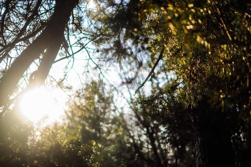 Sunny rays through the green trees. Sunny rays through the green trees royalty free stock photos