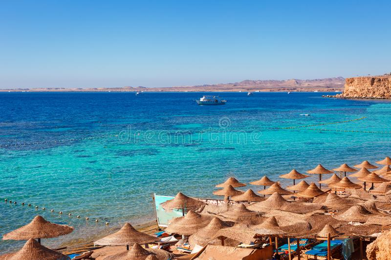 Sunny resort beach with palm tree at the coast of Red Sea in Sharm el Sheikh, Sinai, Egypt, Asia in summer hot. Сoral reef and. Crystal clear water. Famous royalty free stock photo
