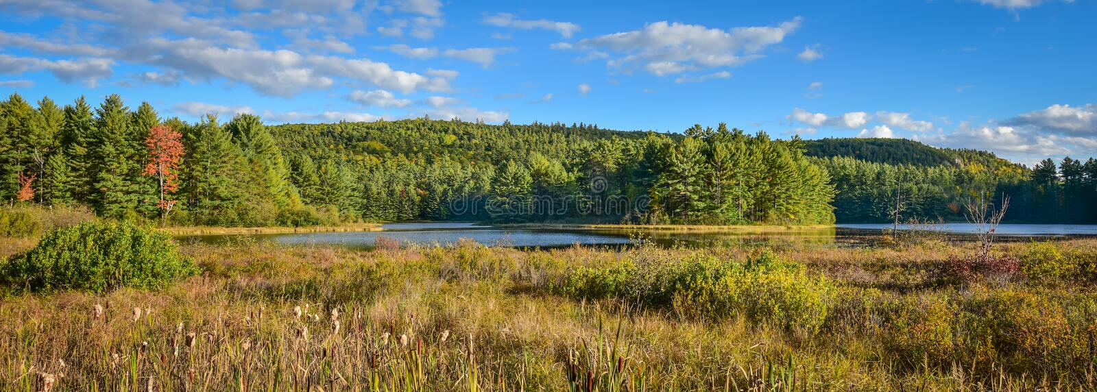 Sunny roadside view of marsh and woodland wilderness country. Warm summer day in boreal forest wilderness in Ontario Canada. stock photo