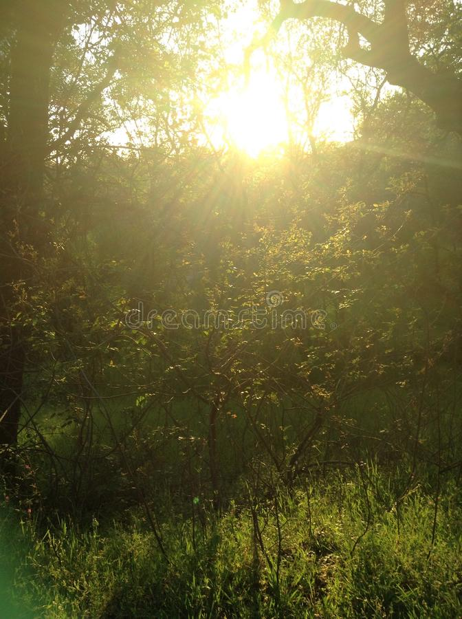 Sunny Scape photographie stock