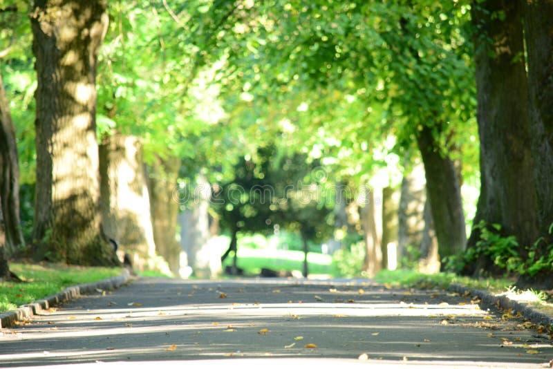 Sunny Scottish Country Walk stock photo