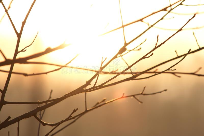 THE SUNNY SIDE OF LIFE. Sun shines brightly through tree branches creating interesting contrast royalty free stock photo