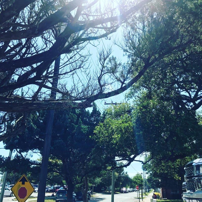 Sunny Sidewalk Trees fotografia stock