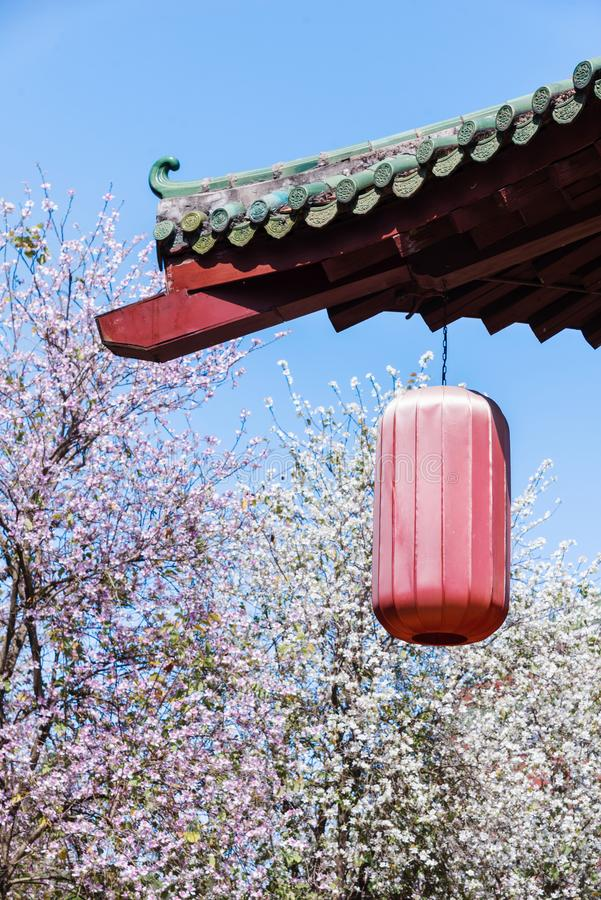 Sunny spring day with full bloom royalty free stock photography
