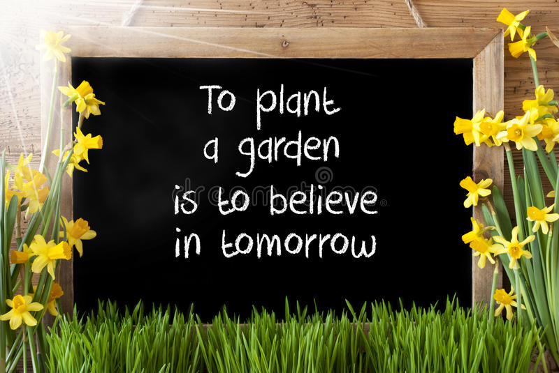 Sunny Spring Narcissus, Chalkboard, Quote Plant Garden Believe In Tomorrow stock image