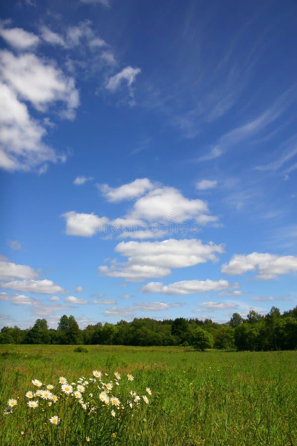 Sunny summer royalty free stock image