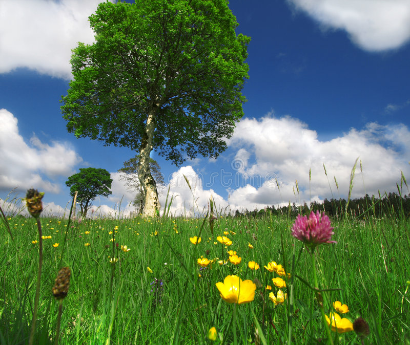 A Sunny Summer Day royalty free stock images