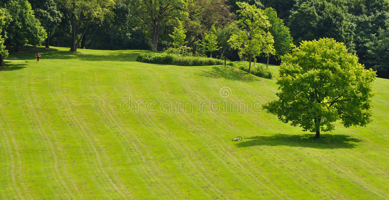 a sunny summer day in the park royalty free stock image