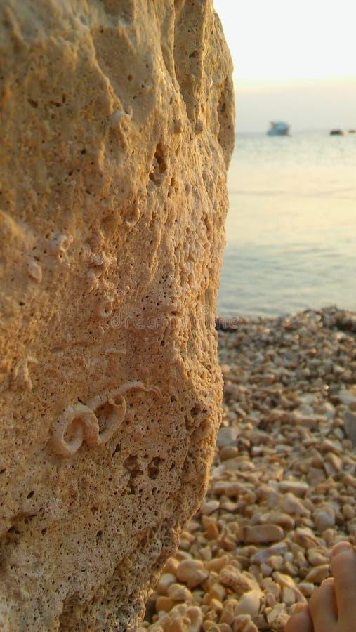Sunny Summer Day Sea Side-Felsen mit Fossil lizenzfreie stockfotos