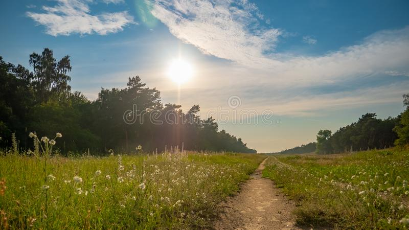 Sunny summer day after the storm. Beautiful meadow with mist. Path in field with wildflowers. Gdansk, Stogi, Poland royalty free stock photography