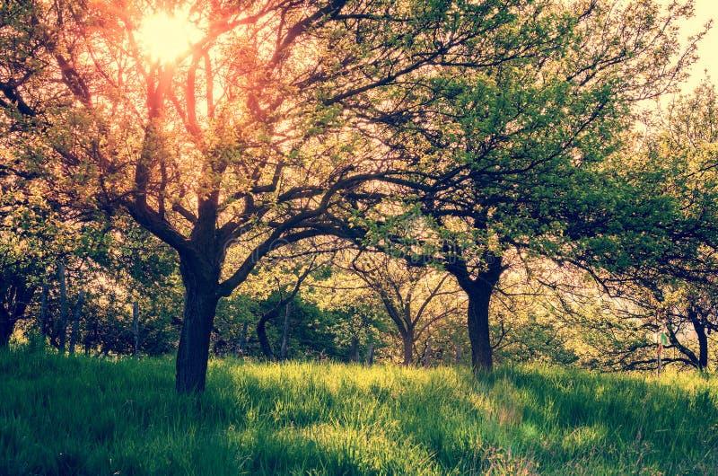 Sunny Summer Garden images stock