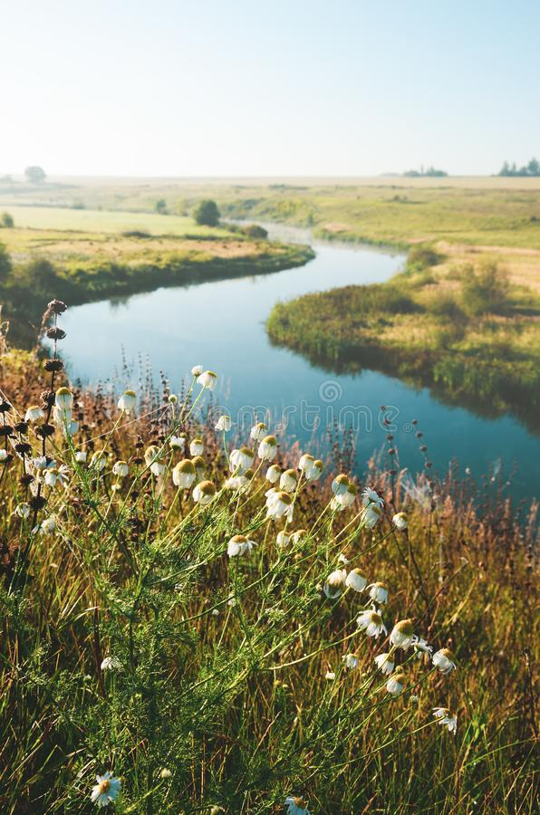 Sunny summer landscape with daisies on a foreground and river bend on a background stock images