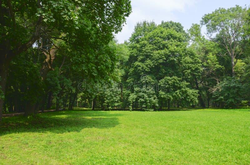 Sunny summer landscape royalty free stock image