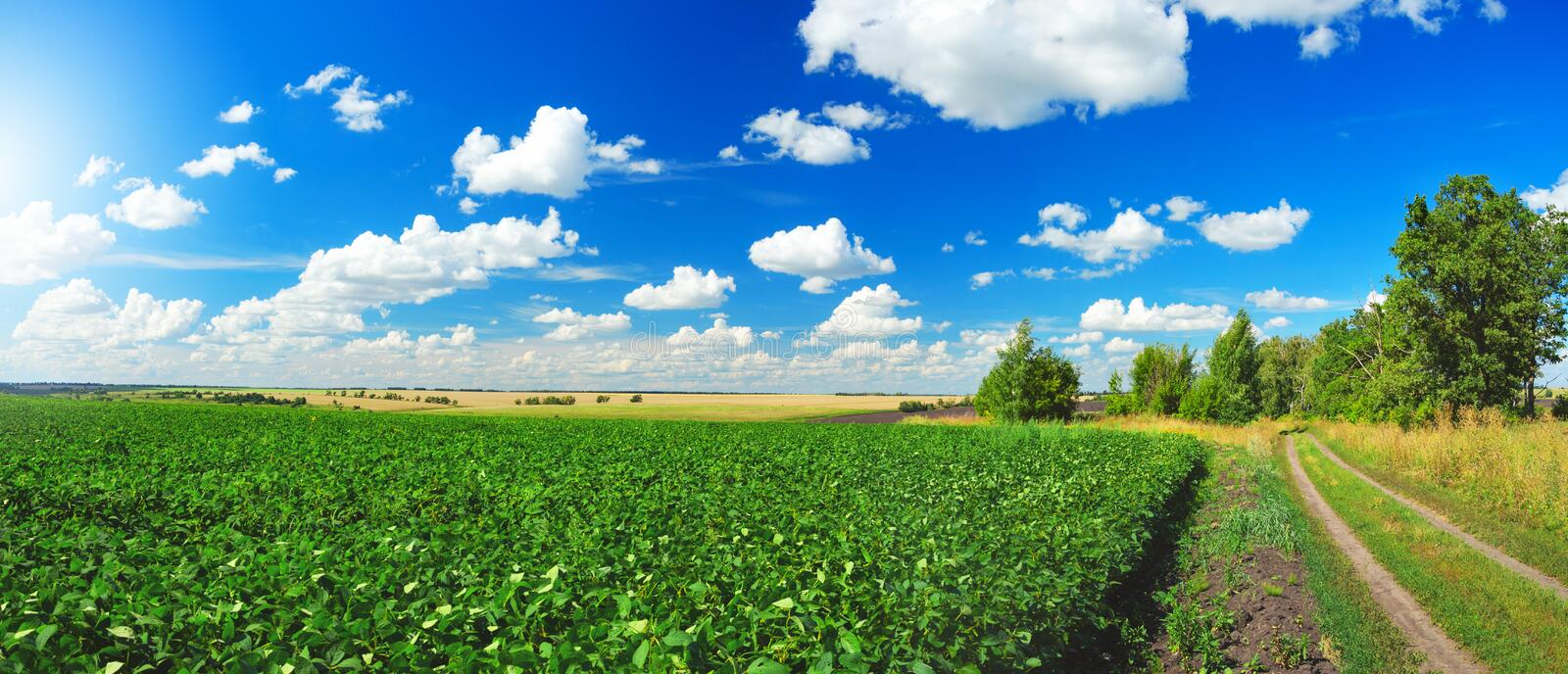 Sunny summer landscape with ground country road,green soy field and beautiful clouds in blue sky. stock photos