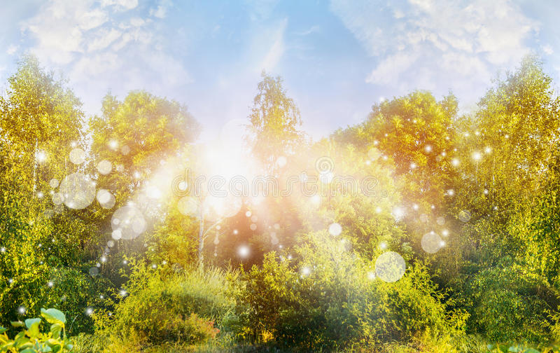 Sunny summer nature background with green trees ans sun rays. Outdoor royalty free stock photography