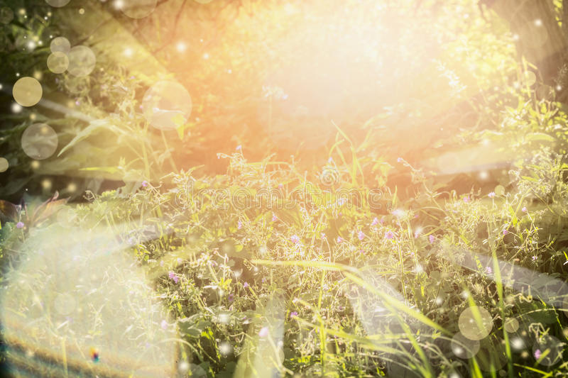 Sunny summer nature background with sun rays and bokeh. Summer herbs field with wild flowers in garden or park stock photo