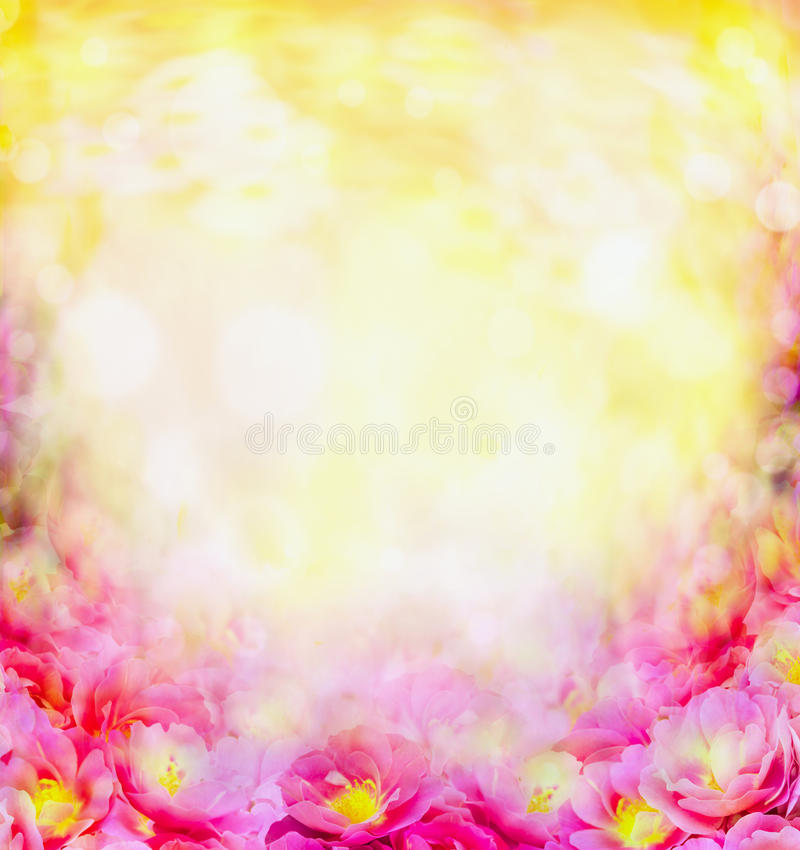 Sunny summer pink flowers blurred background stock photos