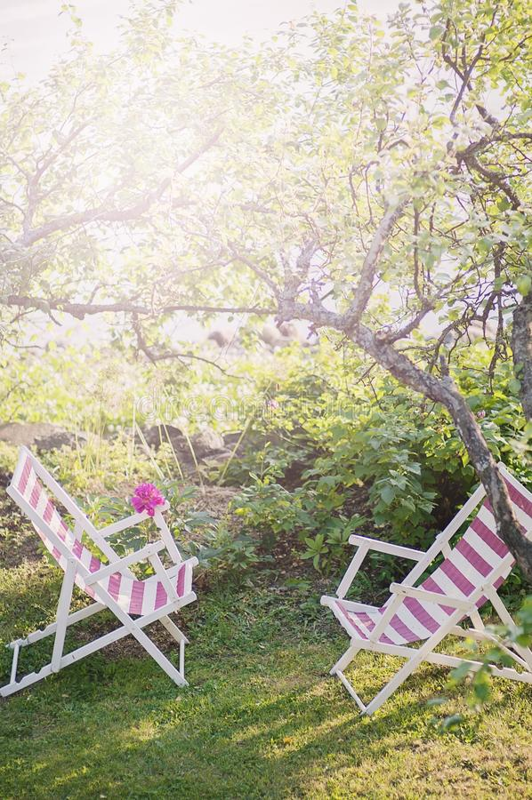 Sunny Summer scenery from the garden. Two sun bed chairs against each other under an apple tree while sun rays or sunbeams between stock photography