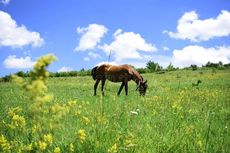 Sunny Sunday et fleurs jaunes image libre de droits